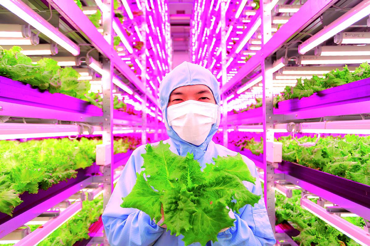 teknologi agrikultur cina